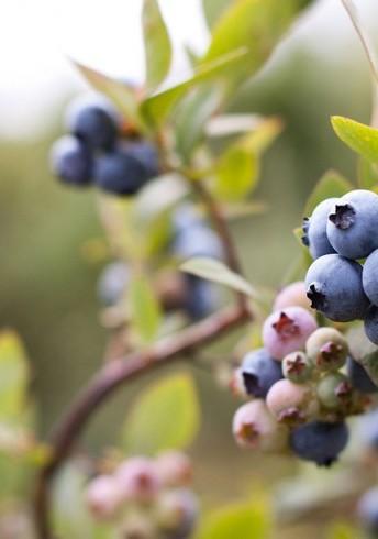 Easy Blueberry Salsa