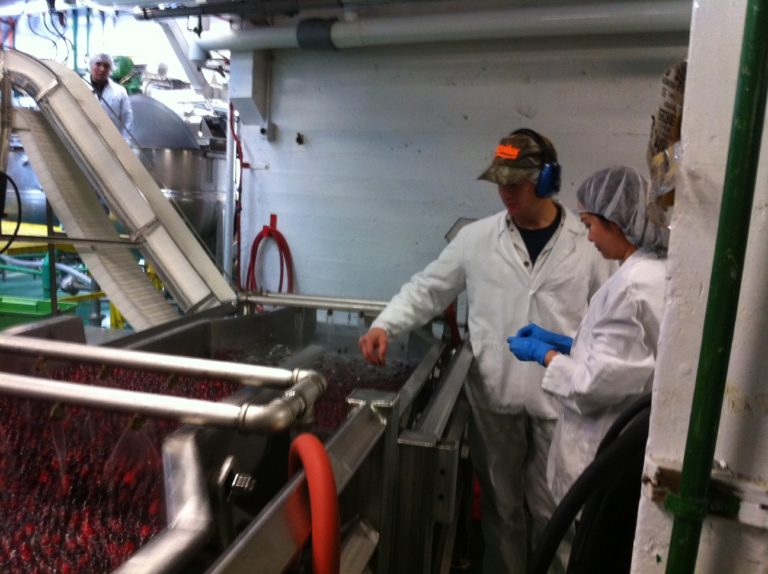Employees checking on a batch of cranberry puree